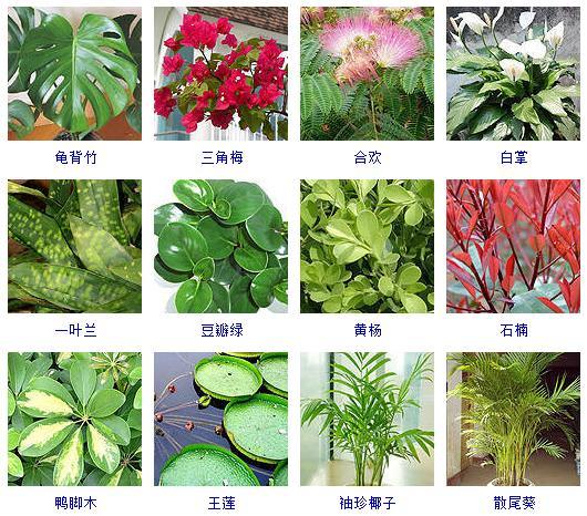 100种观叶植物,你都见过养过吗? - 候鸟公寓 - 海之家老年网