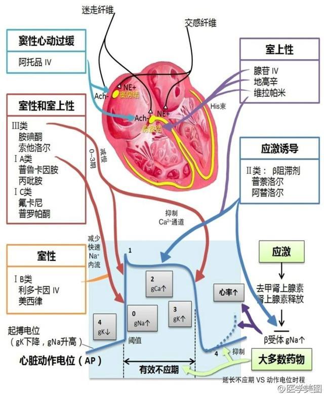 异常珍贵的心血管疾病图文详解 ( 很全面,很强大!) - 候鸟公寓 - 海之家老年网