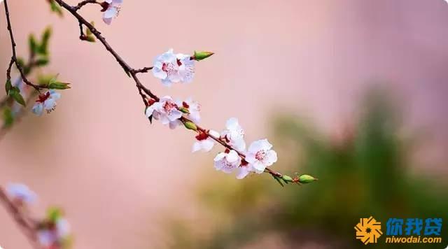 四月不读桃花诗,怎知江南春几许? - 海之家老年网 - 海之家老年网